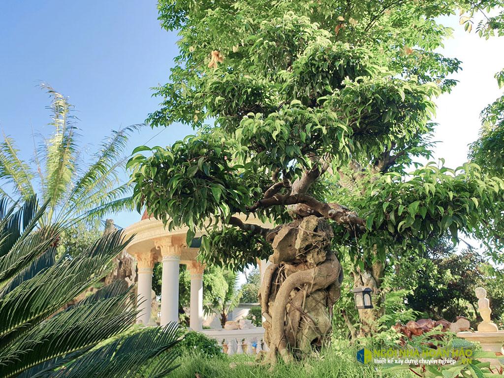 Góc sân vườn hình thực tế biệt thự cổ điển 3 tầng đẹp